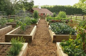 Raised garden beds made out of wood