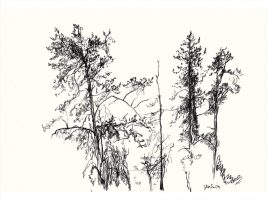 Four trees sketched in black charcoal on white paper.