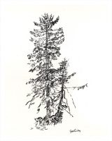 One large pine and a smaller pine sketched in black charcoal on white paper.