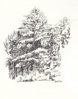 A group of trees, including one tall white pine, sketched in charcoal on white paper.